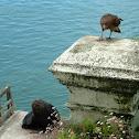 Sea lion and Chimango