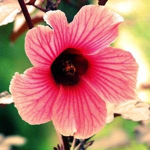 Flowers Bible 生活 App LOGO-APP試玩