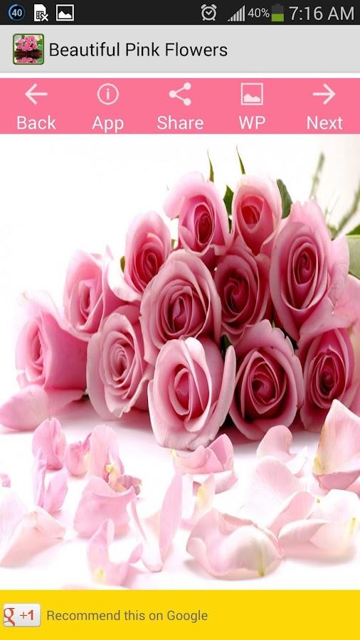 Beautiful Pink Flowers Screenshot