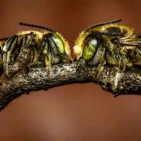 Eye to Eye of Lovers by Dave Lerio - Animals Insects & Spiders