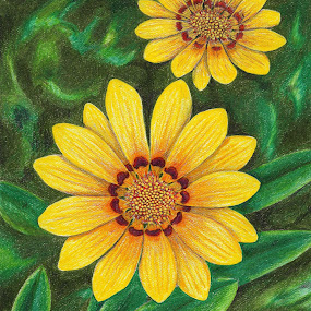 Sisters by Lew Davis - Drawing All Drawing ( plant, blooms, art, plants, flower gardens, gardens, bloom, pencil drawings, yellow, lew davis, blossoms, blossom, drawing, pencil, yellow flowers, drawings, nature, pencil drawing, flowers, flower plants, garden, flower,  )
