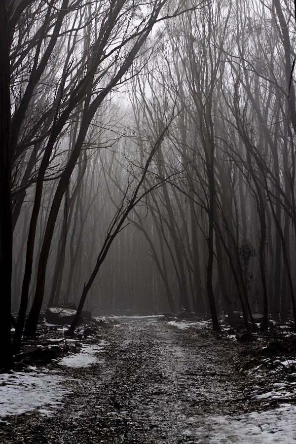by Craig Taylor - Landscapes Forests ( 50d east holiday )