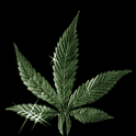 Dancing Weed Live Wallpaper icon