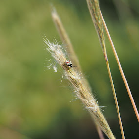 September bug. by Silvana van Engelen - Nature Up Close Leaves & Grasses ( nature, grass, plants, bug, insect )
