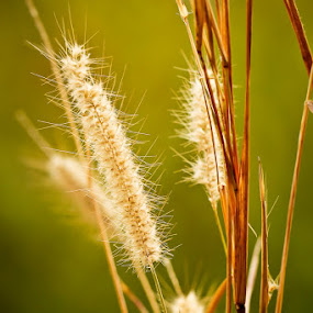 summer by Ryan Hortizuela - Nature Up Close Leaves & Grasses