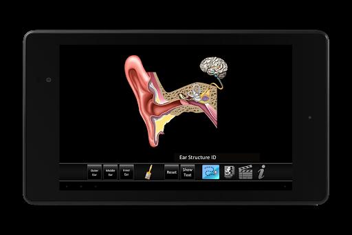 玩教育App|Ear ID免費|APP試玩