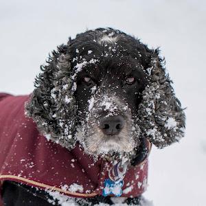 Angus snow.jpg