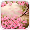 Fleurs de printemps Fond Animé