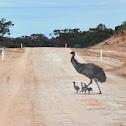Emu and Babies