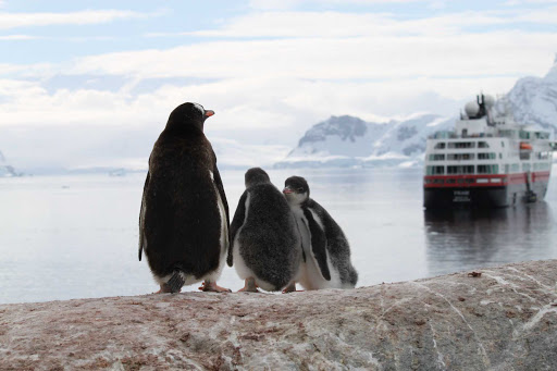 Hurtigruten-Fram-penguins-Antarctica - Penguins near the Almirante Brown station in Antarctica seem to bid farewell to Hurtigruten's flagship the Fram.