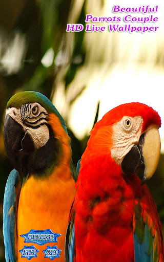 Beautiful Parrots Couple Live