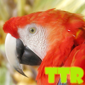 live parrot wallpaper icon