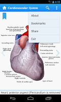 Screenshot of Human Anatomy II Lite