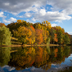 Lake @ Storm King Art Center by Bala Ve - Landscapes Forests ( storm king art center, fall colors, reflections, new york,  )