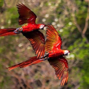 Flying Together2.jpg
