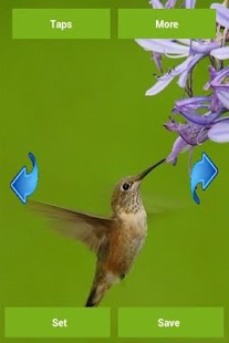 Hummingbird Wallpapers - screenshot thumbnail