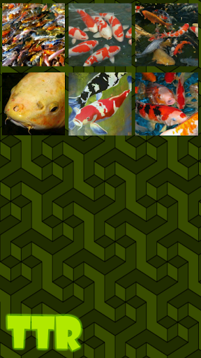 錦鯉 滑動 謎|玩解謎App免費|玩APPs
