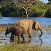 Wildlife Sri Lanka - Yala
