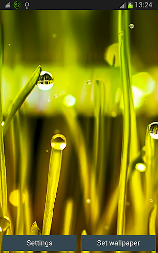 Rain n Grass Wallpaper App
