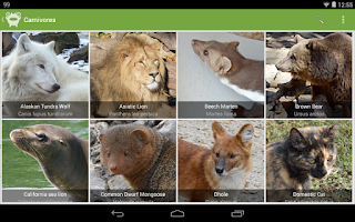 Screenshot of Creatures of Earth FREE