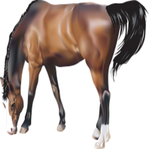 Horses True Or False Game for PC and MAC