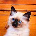 小猫拼图 icon