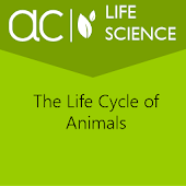 The Life Cycle of Animals