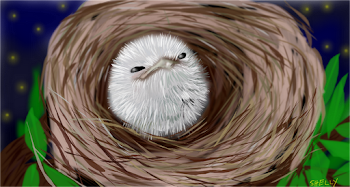 Can't Forget the Tawny Frogmouth Chick