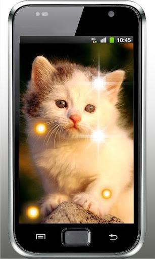 Plush Kitty HD Live Wallpaper
