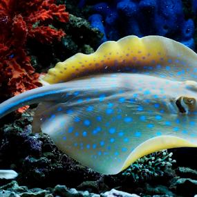Pari by Marcelino Moningka - Animals Fish