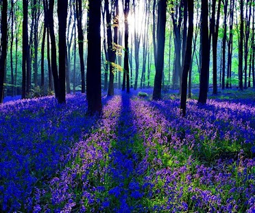 玩解謎App|Twilight Forest免費|APP試玩