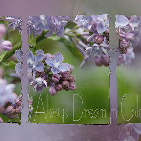 Always Dream in Color by Tammy Drombolis - Typography Quotes & Sentences