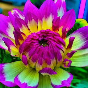 beautiful flower by Nic Scott - Flowers Single Flower ( flowers, flower,  )