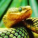 Snakes Bible logo