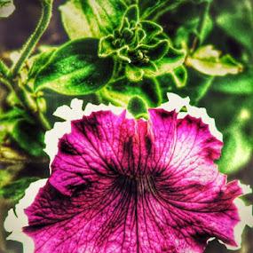 by Nat Bolfan-Stosic - Flowers Flower Gardens ( edge )