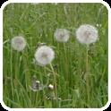Pollen (de) logo