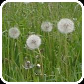 Pollen (de)