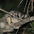 Queensland's Nocturnal Wildlife