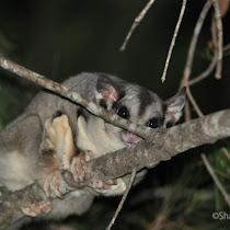Queensland's Nocturnal Wildlife