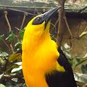 bird yellow