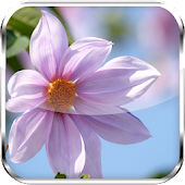 Flower HD Live Wallpapers
