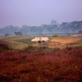 by Mitrava Banerjee - Landscapes Prairies, Meadows & Fields