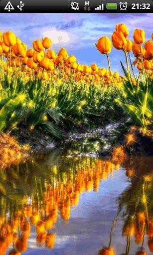 Reflective Tulip Garden LWP