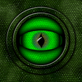 Reptile Eye Live Wallpaper