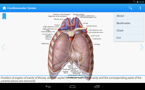 Human Anatomy II Lite - screenshot thumbnail