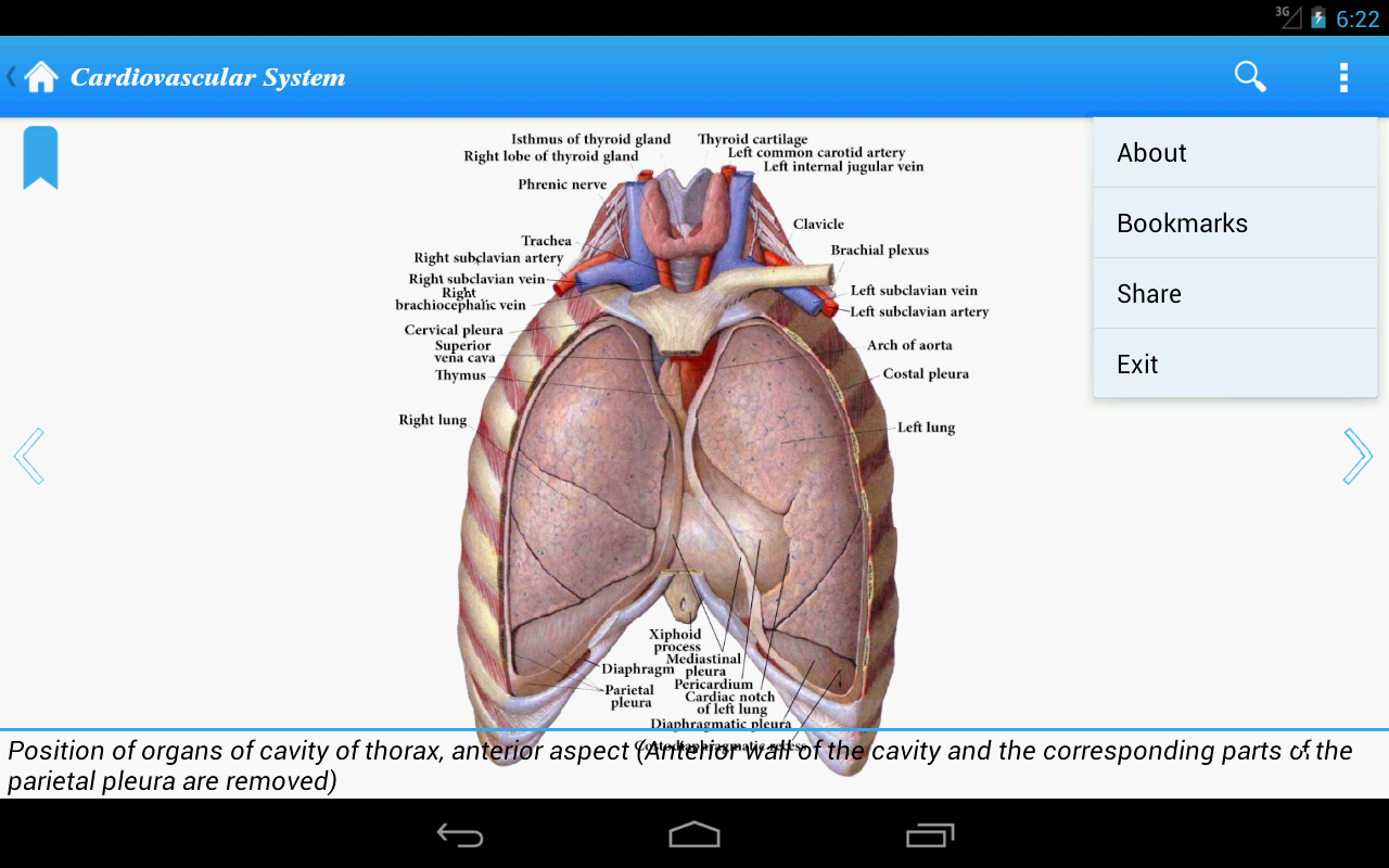 Human Anatomy II Lite- screenshot
