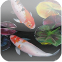 3D Koi Pond Reality Live Wallp icon