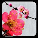 Kanji Wallpaper icon