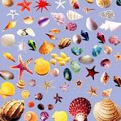 3D Shells