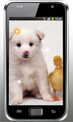 Hello my Puppy Live Wallpaper